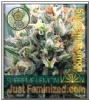Vision Supreme Lemon Female 5 Marijuana Seeds